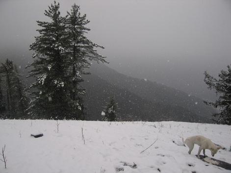 Зима в Гималаях