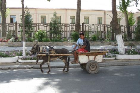 Узбекистан ослик