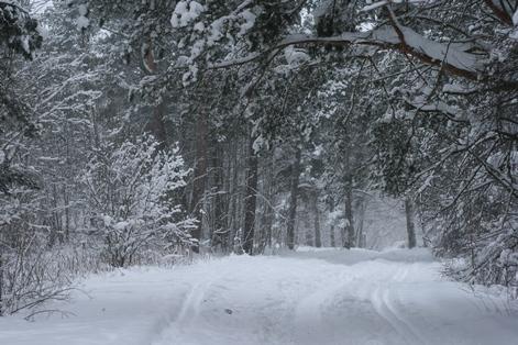 Эстония, лес