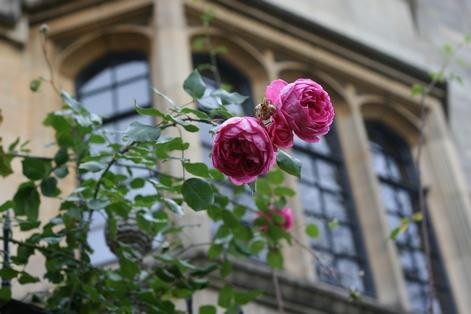Университет в Оксфорде