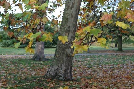 парк в Гринвиче