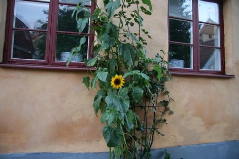 Sweden_2011_1_314