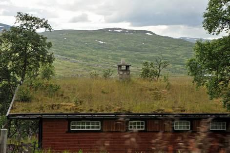 Norvegian_roof_1
