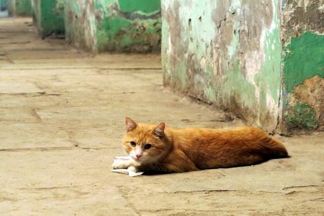 Hermitage cats 2