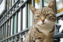 Hermitage cats 221