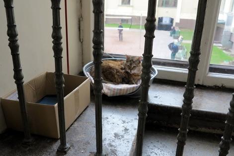 Hermitage cats 4