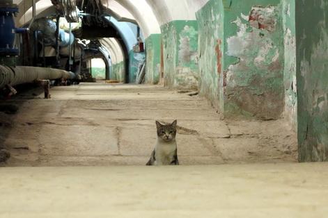 Hermitage cats 6