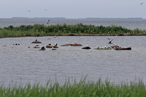 Estonia birds