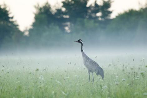 Estonia birds2