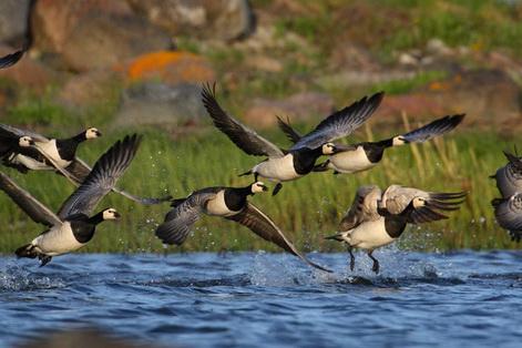 Estonia birds5