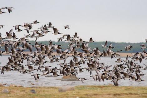 Estonia birds7