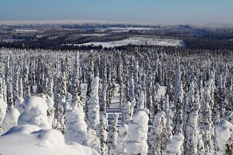 Lapland77 7